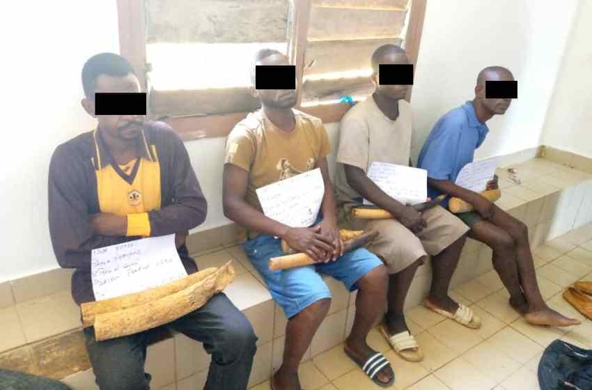 Gabon/Trafic d'ivoire: 4 présumés trafiquants interpellés à Kango