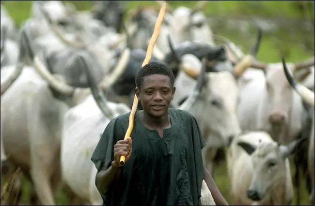 Herdsmen to register in Ekiti