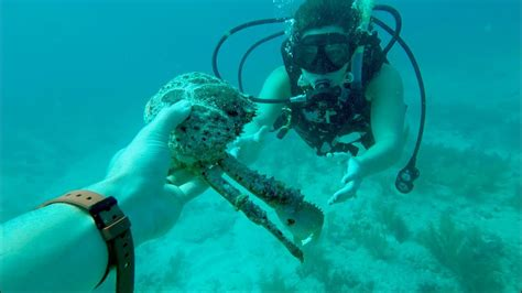 scuba diving florida keys youtube