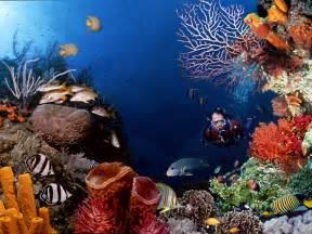 health benefits scuba diving stuff2