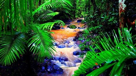 tropical rainforest wallpaper wallpapertag