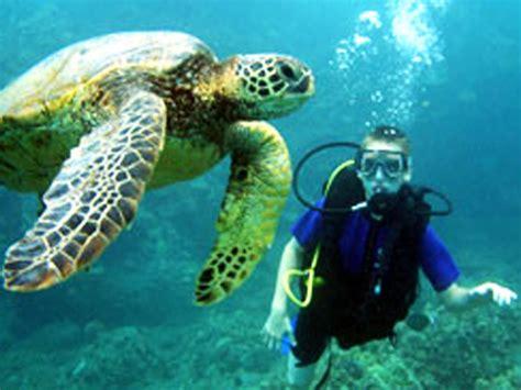 seasport divers afternoon tank dive hawaii discount
