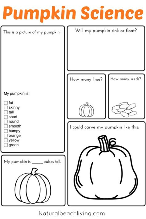pumpkin activities kids stem pumpkin life cycle free