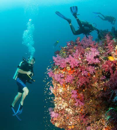 manta ray diving koh bon similan islands liveaboard