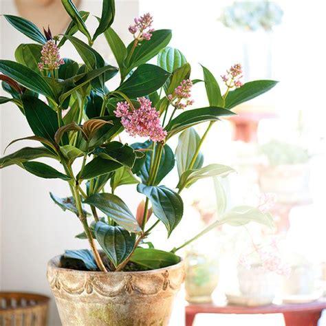 4 durable indoor plants home home garden ideas