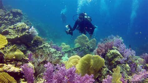 scuba diving coral reefs phuket youtube