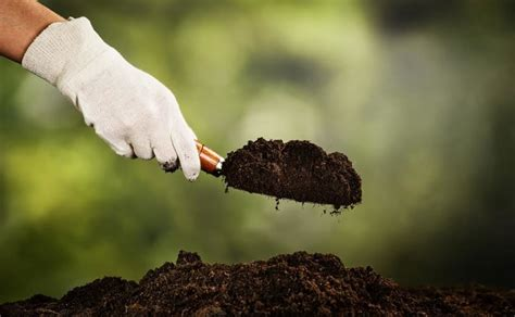 6 steps preparing healthy soil growing vegetables