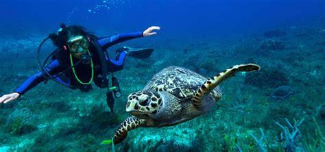 roatan discover scuba beginners diving west bay tours