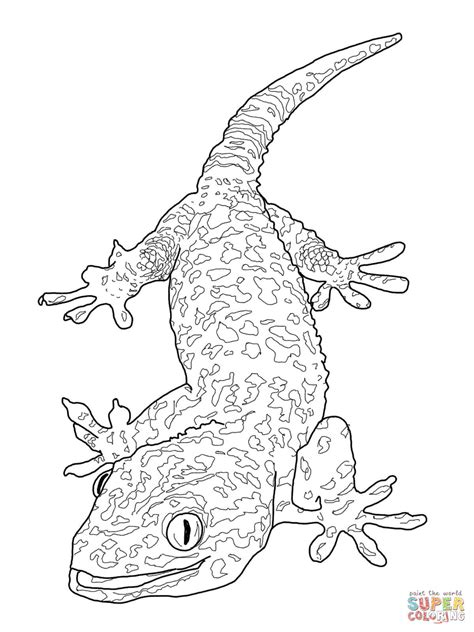 skink anime coloring pages print coloring 2019