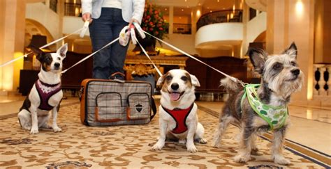 pet friendly hotels resorts hotels dogs cats aarp