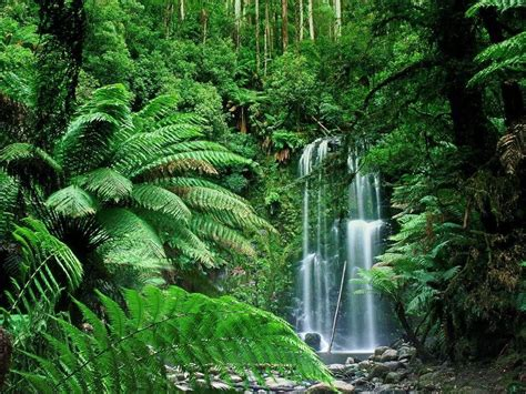 tropical rainforest green plants earth waterfall photo forest