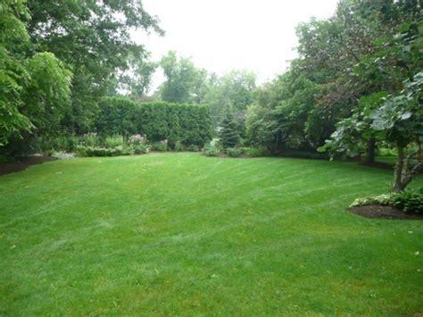 maintenance tips backyard grasses wearefound home design
