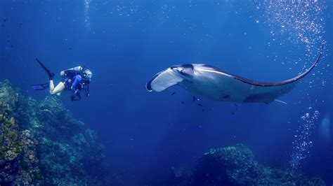 all4diving scuba diving phuket thailand phuket diving padi