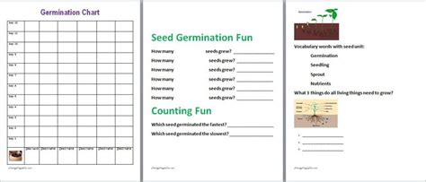 free seed germination lesson plans kids directions free