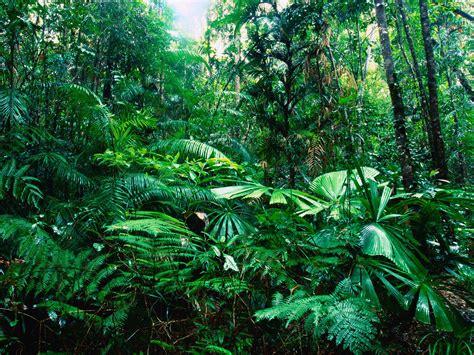 tropical rainforest vegetation biological science picture directory pulpbits