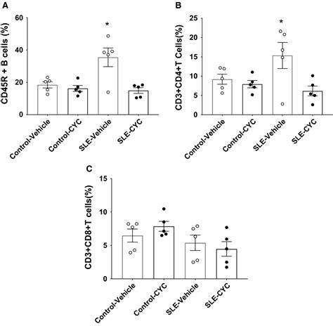 cyclophosphamide treatment hypertension renal injury experimental model