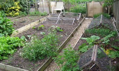 cultivating vegetable garden soil gardening network