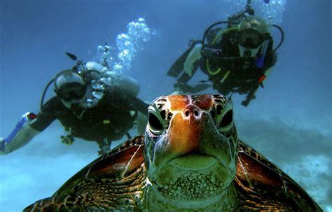 roatan scuba diving infinity bay