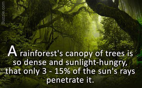 diverse plants animals tropical rainforest biome science struck
