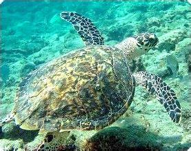 snorkeling scuba diving courses learn scuba dive scuba