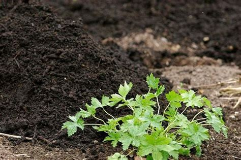 vegetable growing basics advice soil preparation rhs gardening