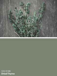 sherwin williams green paint color dried thyme sw