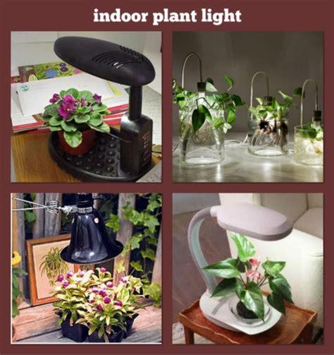 24 images african violet greenhouse pinterest