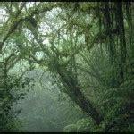 7 tropical rainforest climate photos biological science picture