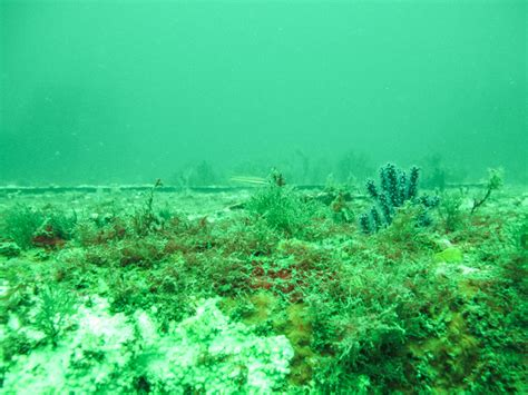 wreck diving panama city beach camels chocolate travel