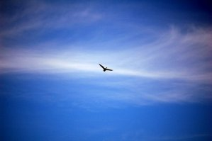 The sky and the bird
