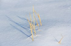 Weeds-in-Snow