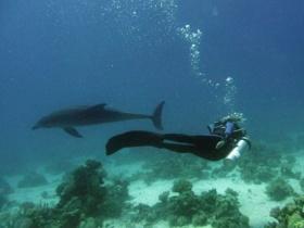 Meeresbiologie Hurghada