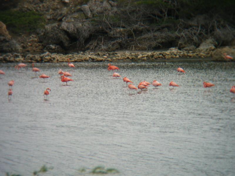Reisebericht Tauchen Bonaire, Niederländische Antillen 2012
