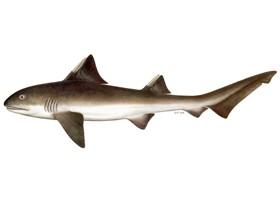 TDI SDI Shark Awareness Kurs Harald Meisner