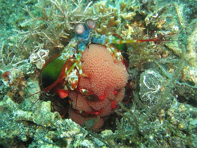 Reisebericht Indonesien Lembeh-Strait