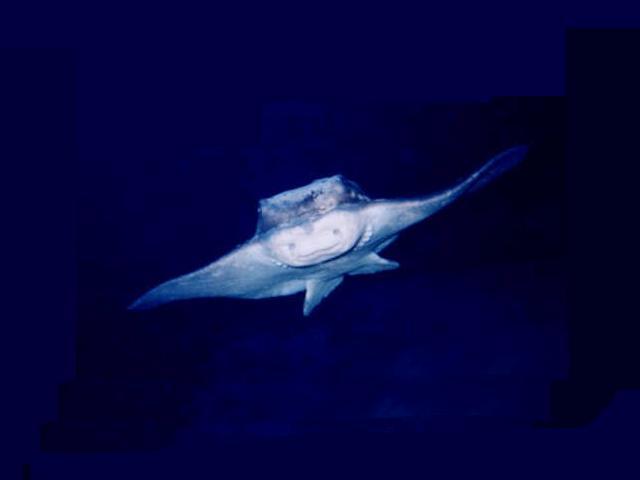 Manta Reisebericht Lanzarote 2003