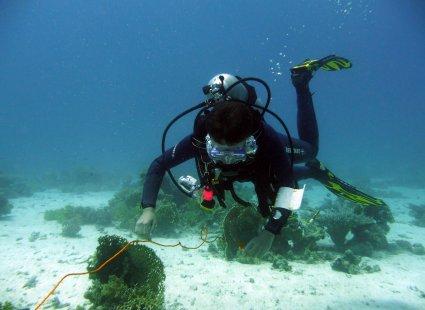 Meeresbiologiekurs Juli 2009 in Hurghada