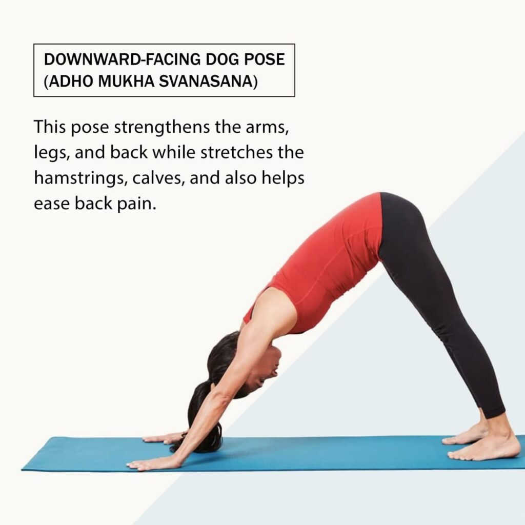 Downward-Facing-Dog-Pose-types-of-yoga-yoga-facts