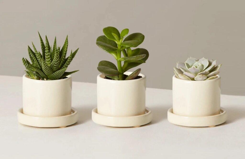 Plant Subscription