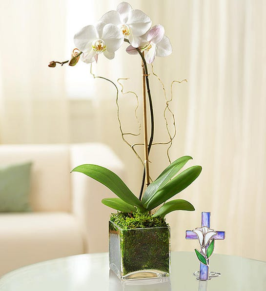 1-800-Flowers Elegant Orchid- gift for groom whose dad passed