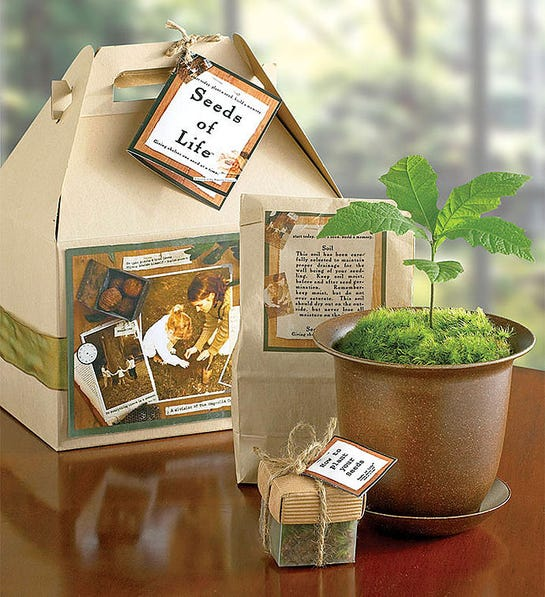 1-800-Flowers Seeds of Life Tree Kit- gift for groom whose dad passed
