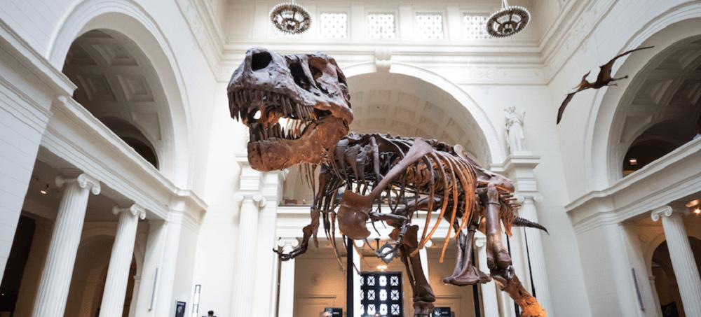 Visit a Museum