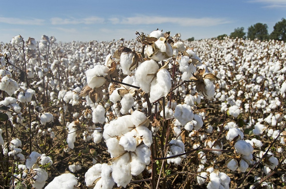 Pre Shrunk Cotton vs Regular Cotton- what's the difference