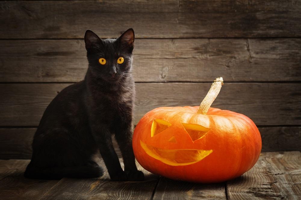 Are Black Cats In Danger Around Halloween Season?