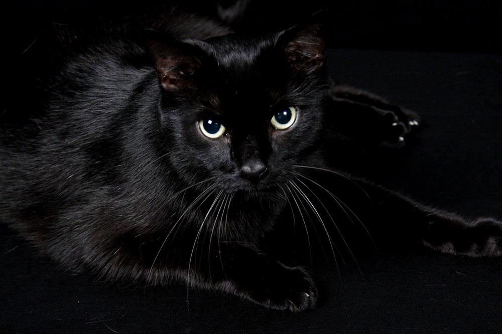 Are Black Cats in Danger Around Halloween
