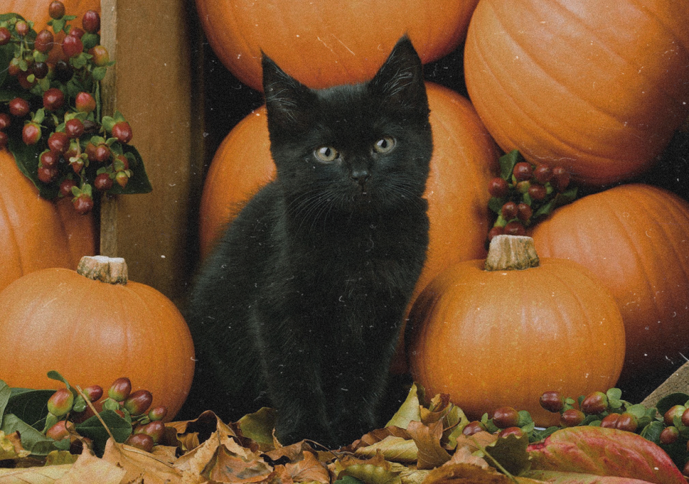 Are black cats in danger around Halloween - Tips to keep them safe