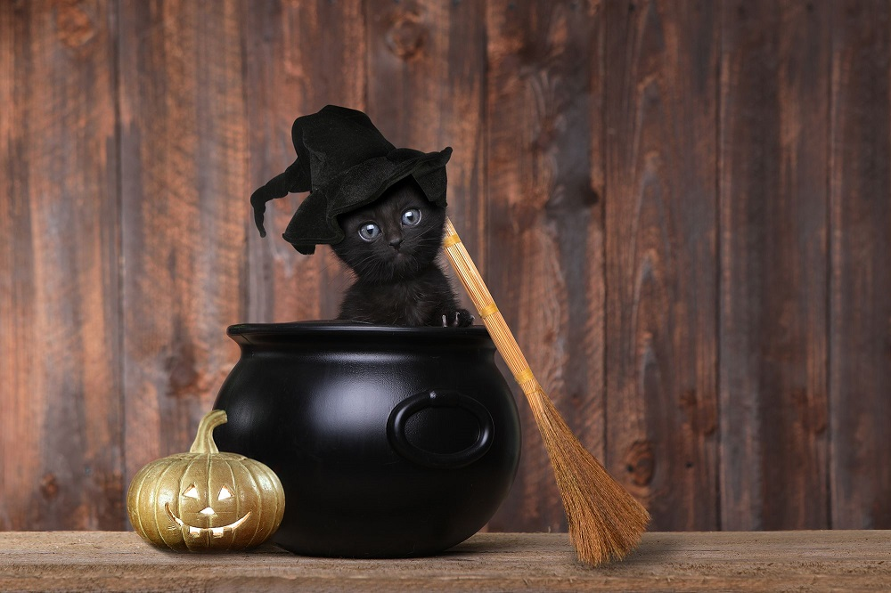 How to keep your cat safe at Halloween - keep it inside