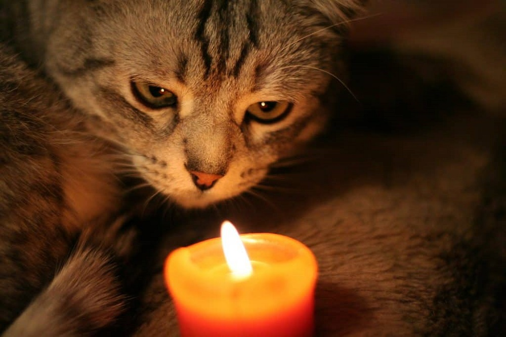 How to keep your cat safe at Halloween - keep it far from candles