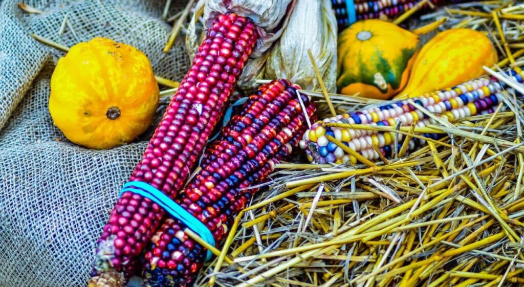 Do Native Americans Celebrate Thanksgiving?