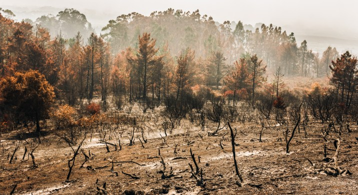 The ground still smolders and the sky is smoky. At the front of the picture are burned-up tree trunks; farther back in the shot are trees with branches and leaves still on them.